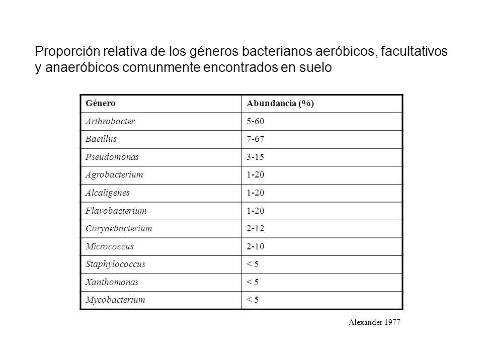 Proporción relativa de los géneros bacterianos aeróbicos, facultativos y anaeróbicos comunmente encontrados en suelo GéneroAbundancia (%) Arthrobacter