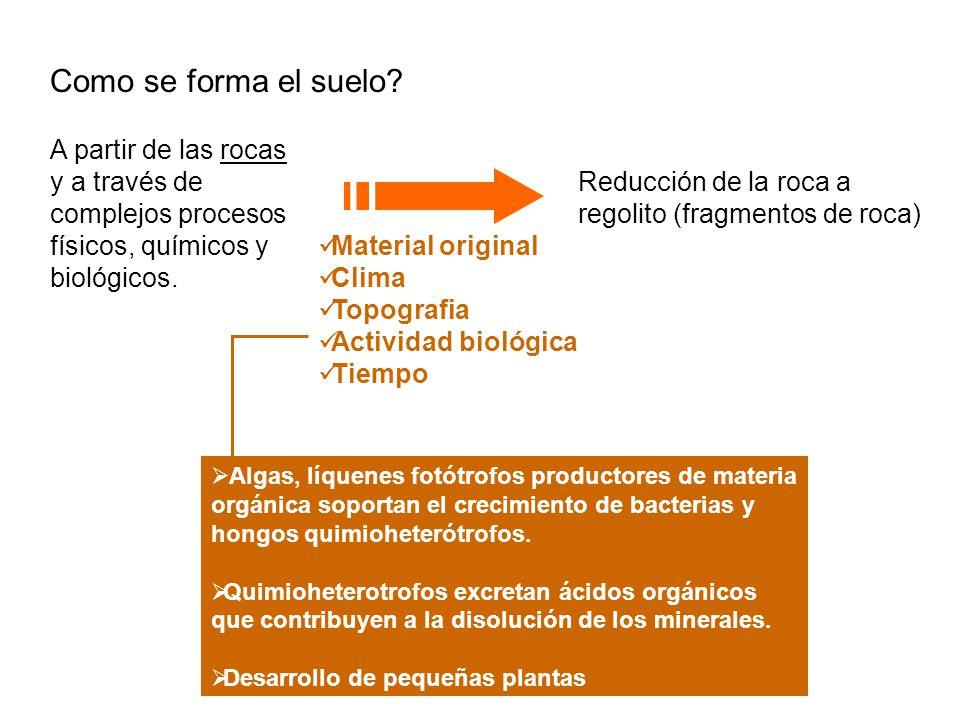 Comunidad microbiana muy diversa + Desarrollo de plantas Número y tipo de microorganismos Fertilidad Solubilización de los minerales que lixivian con el agua hacia la profundidad Desarrollo de plantas superiores y establecimiento de animales Profundización de las capas superiores, mezclado, aireación.