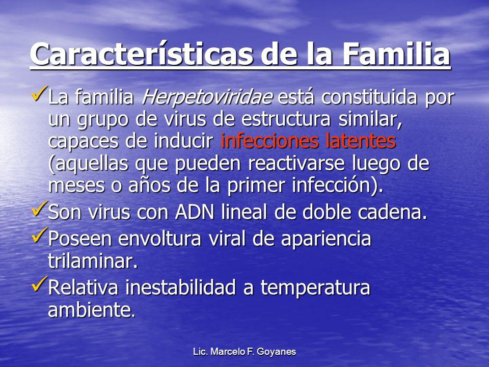 Características de la Familia La familia Herpetoviridae está constituida por un grupo de virus de estructura similar, capaces de inducir infecciones l
