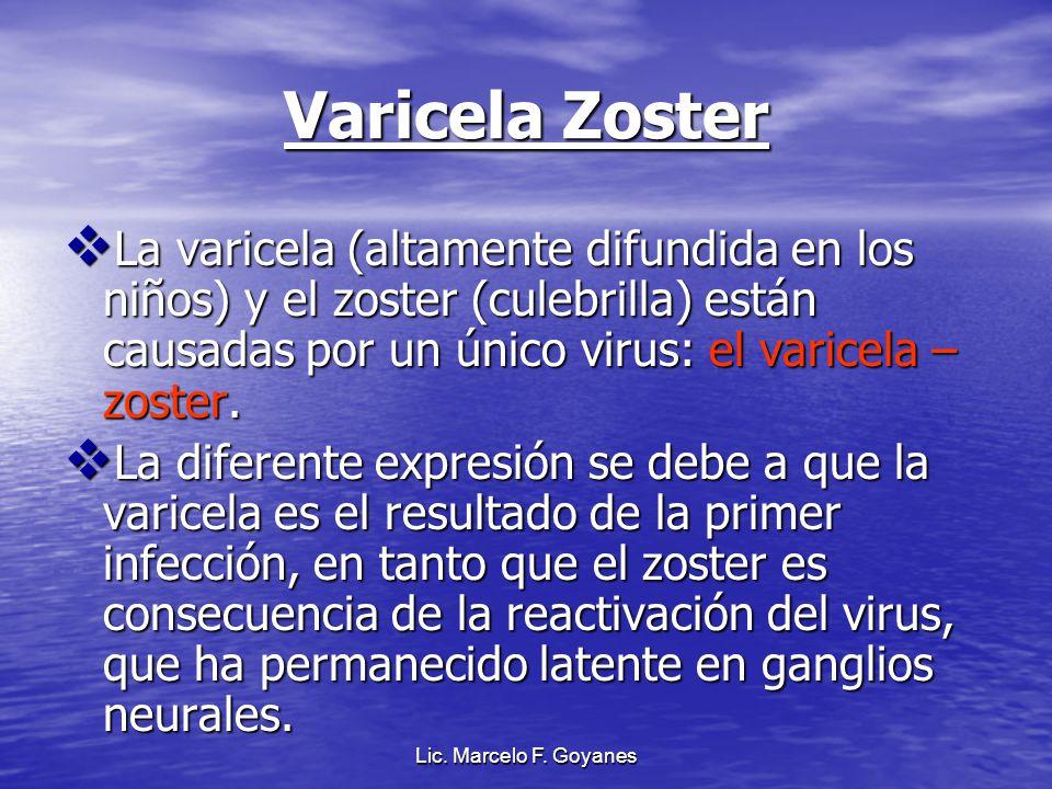 Varicela Zoster La varicela (altamente difundida en los niños) y el zoster (culebrilla) están causadas por un único virus: el varicela – zoster. La va