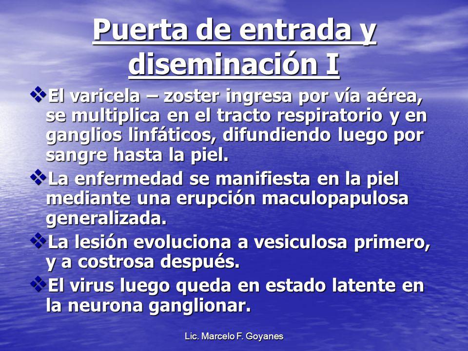 Lic. Marcelo F. Goyanes Puerta de entrada y diseminación I El varicela – zoster ingresa por vía aérea, se multiplica en el tracto respiratorio y en ga