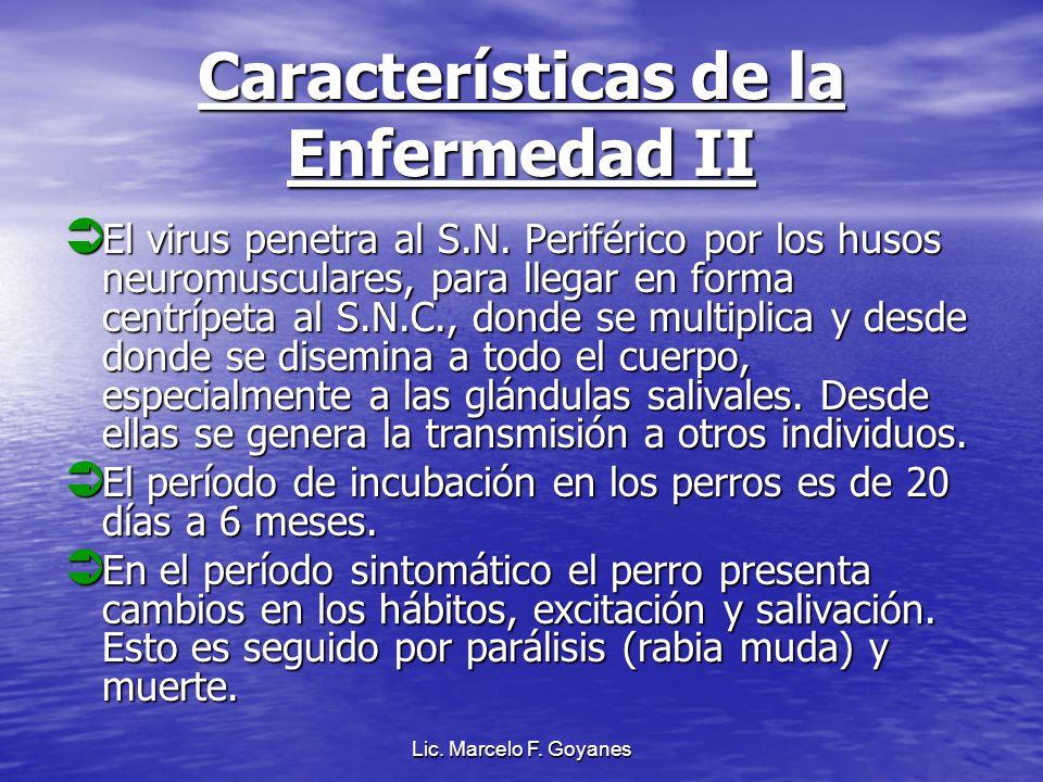Lic. Marcelo F. Goyanes Características de la Enfermedad II El virus penetra al S.N. Periférico por los husos neuromusculares, para llegar en forma ce