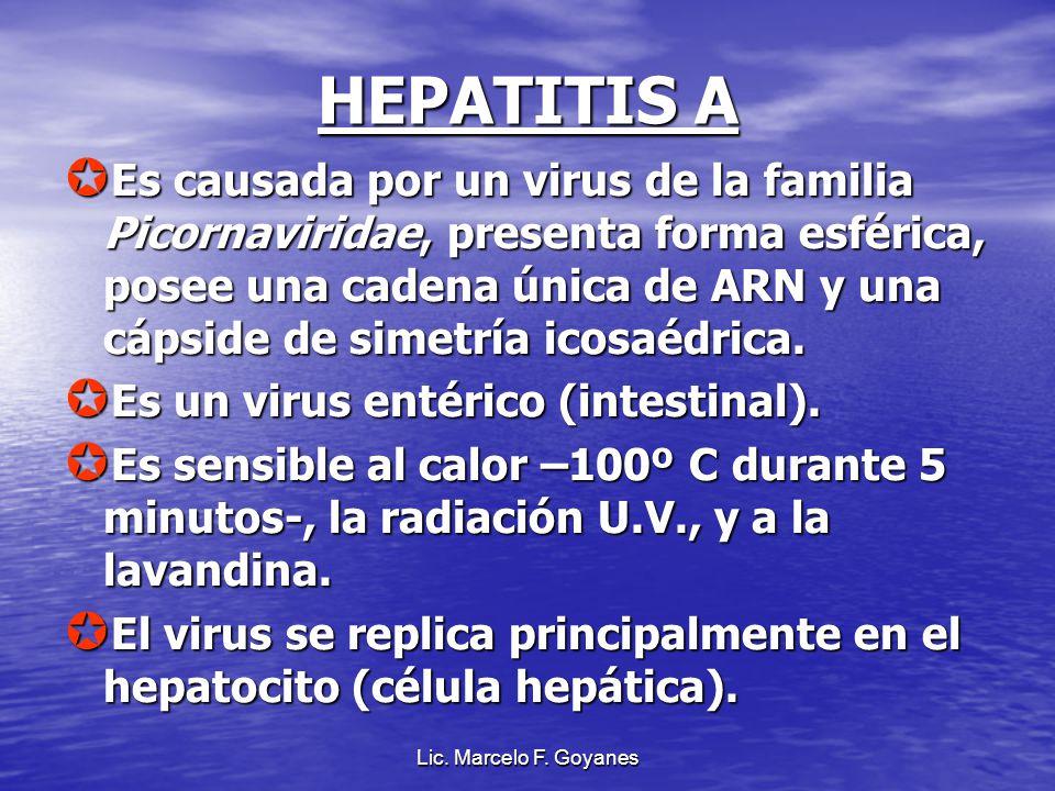 Lic. Marcelo F. Goyanes HEPATITIS A Es causada por un virus de la familia Picornaviridae, presenta forma esférica, posee una cadena única de ARN y una