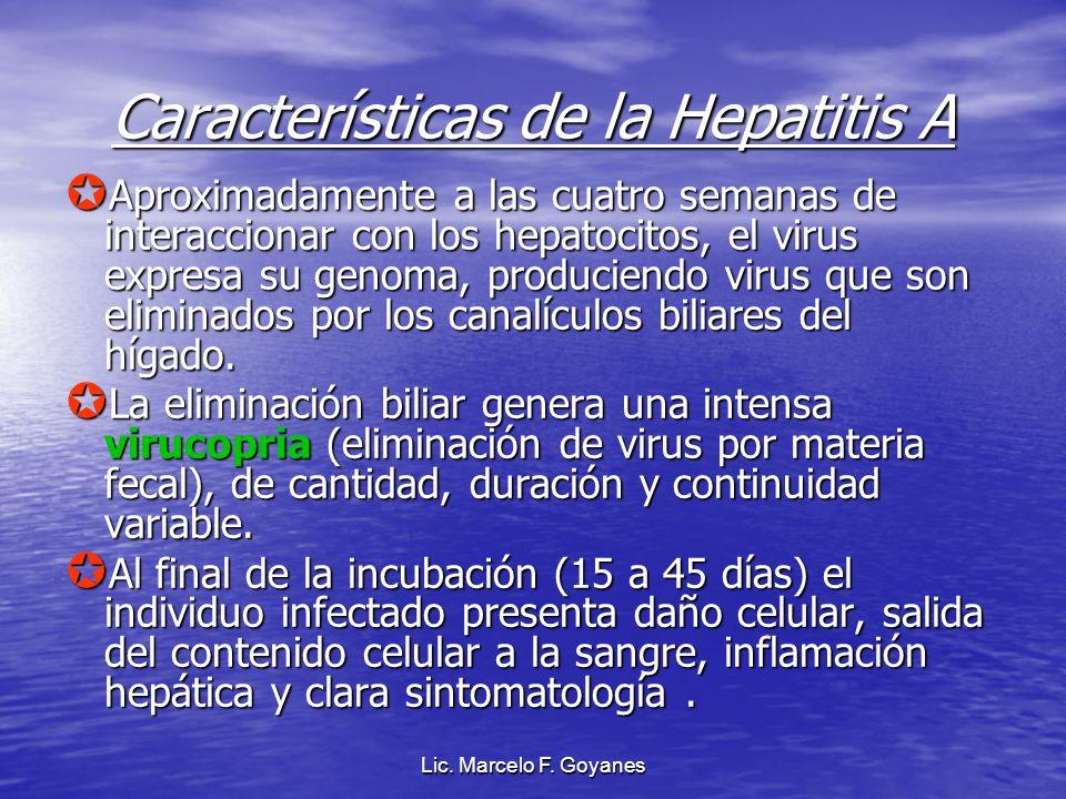 Lic. Marcelo F. Goyanes Características de la Hepatitis A Aproximadamente a las cuatro semanas de interaccionar con los hepatocitos, el virus expresa