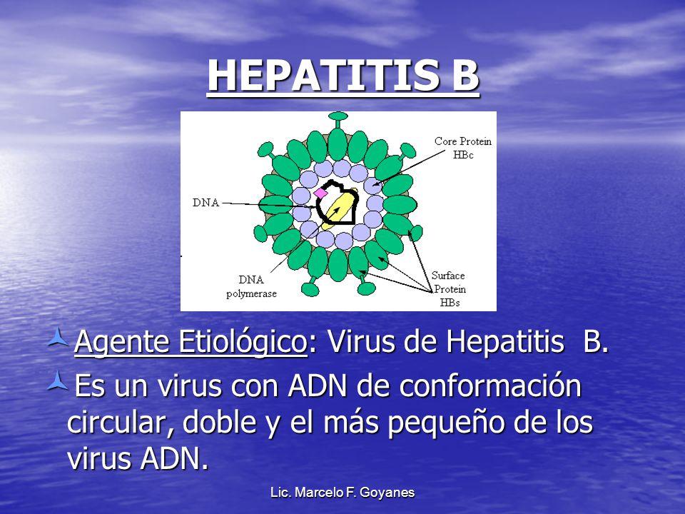 Lic. Marcelo F. Goyanes HEPATITIS B Agente Etiológico: Virus de Hepatitis B. Es un virus con ADN de conformación circular, doble y el más pequeño de l