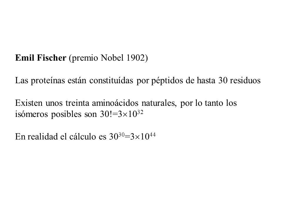 Emil Fischer (premio Nobel 1902) Las proteínas están constituídas por péptidos de hasta 30 residuos Existen unos treinta aminoácidos naturales, por lo tanto los isómeros posibles son 30!=3 10 32 En realidad el cálculo es 30 30 =3 10 44