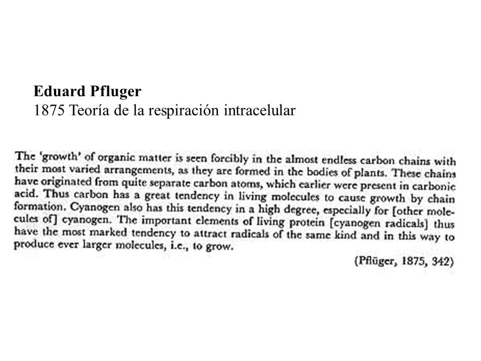 Eduard Pfluger 1875 Teoría de la respiración intracelular
