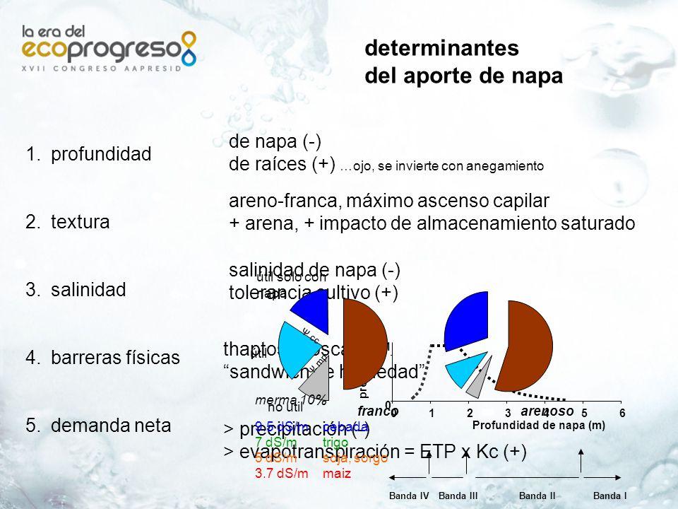 Napa en llanuras Napa Cultivo Cultivo Napa Manejo Visión regional
