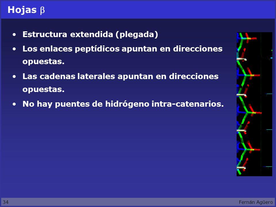 34Fernán Agüero Hojas Estructura extendida (plegada) Los enlaces peptídicos apuntan en direcciones opuestas.