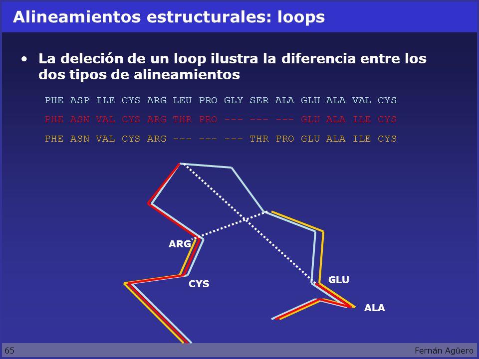 65Fernán Agüero Alineamientos estructurales: loops La deleción de un loop ilustra la diferencia entre los dos tipos de alineamientos PHE ASP ILE CYS ARG LEU PRO GLY SER ALA GLU ALA VAL CYS PHE ASN VAL CYS ARG THR PRO --- --- --- GLU ALA ILE CYS PHE ASN VAL CYS ARG --- --- --- THR PRO GLU ALA ILE CYS ARG GLU ALA CYS