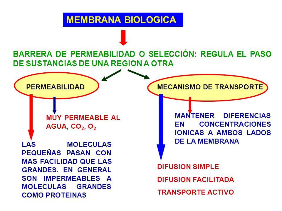 MEMBRANA BIOLOGICA BARRERA DE PERMEABILIDAD O SELECCIÓN: REGULA EL PASO DE SUSTANCIAS DE UNA REGION A OTRA PERMEABILIDADMECANISMO DE TRANSPORTE MUY PE