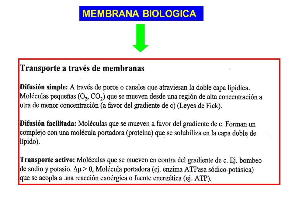 MEMBRANA BIOLOGICA