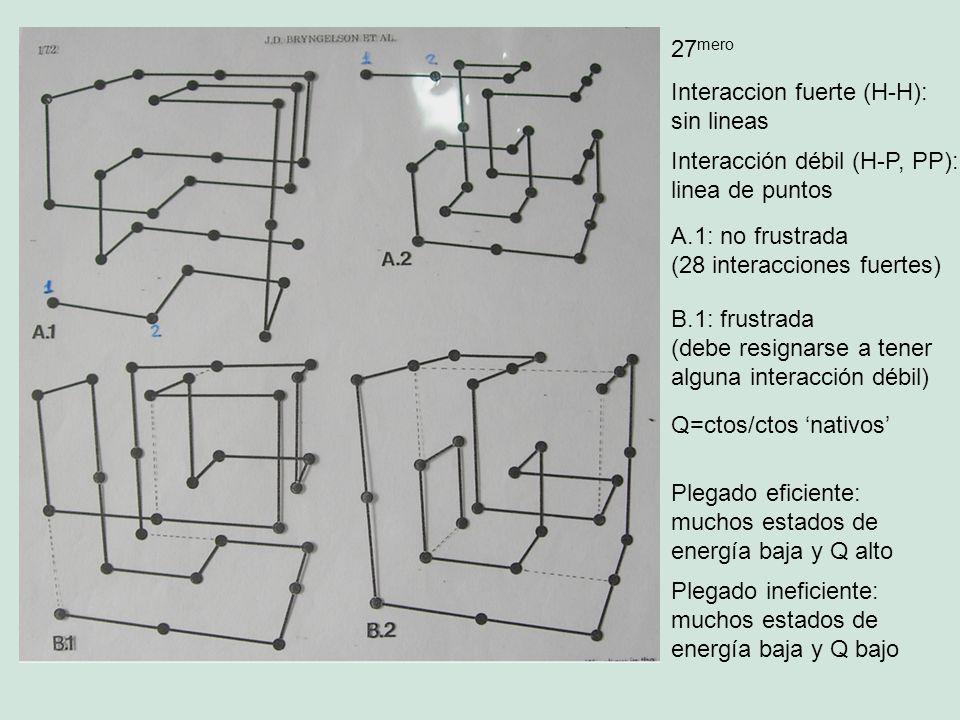 27 mero Interaccion fuerte (H-H): sin lineas Interacción débil (H-P, PP): linea de puntos A.1: no frustrada (28 interacciones fuertes) B.1: frustrada