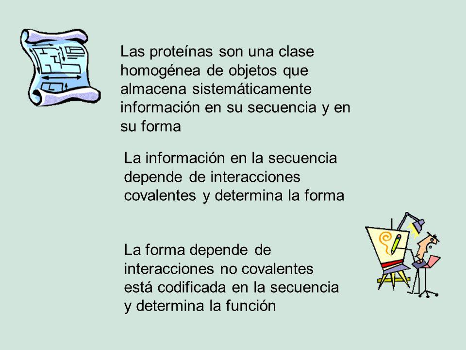 Las proteínas son una clase homogénea de objetos que almacena sistemáticamente información en su secuencia y en su forma La información en la secuenci