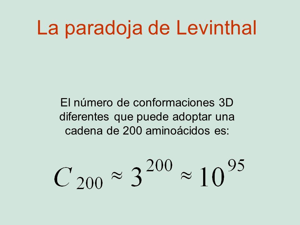 El número de conformaciones 3D diferentes que puede adoptar una cadena de 200 aminoácidos es: La paradoja de Levinthal