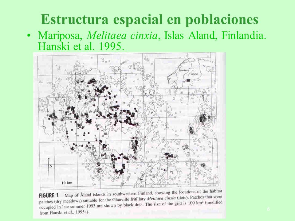 27 Estructura espacial en poblaciones Un modelo conceptual mas apropiado: