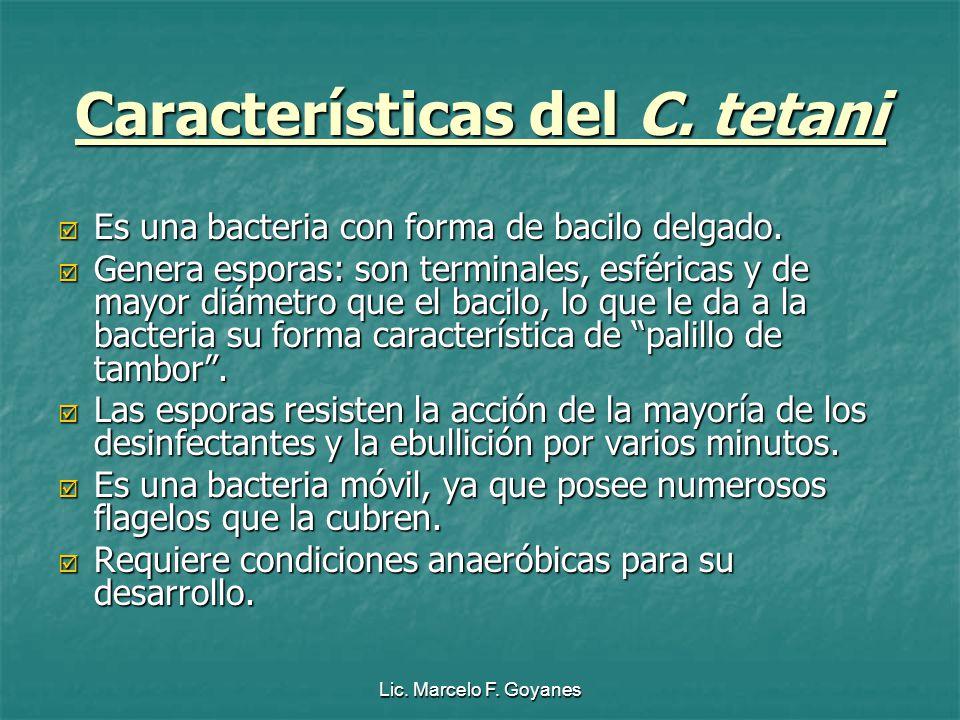 Características del C. tetani Es una bacteria con forma de bacilo delgado. Es una bacteria con forma de bacilo delgado. Genera esporas: son terminales