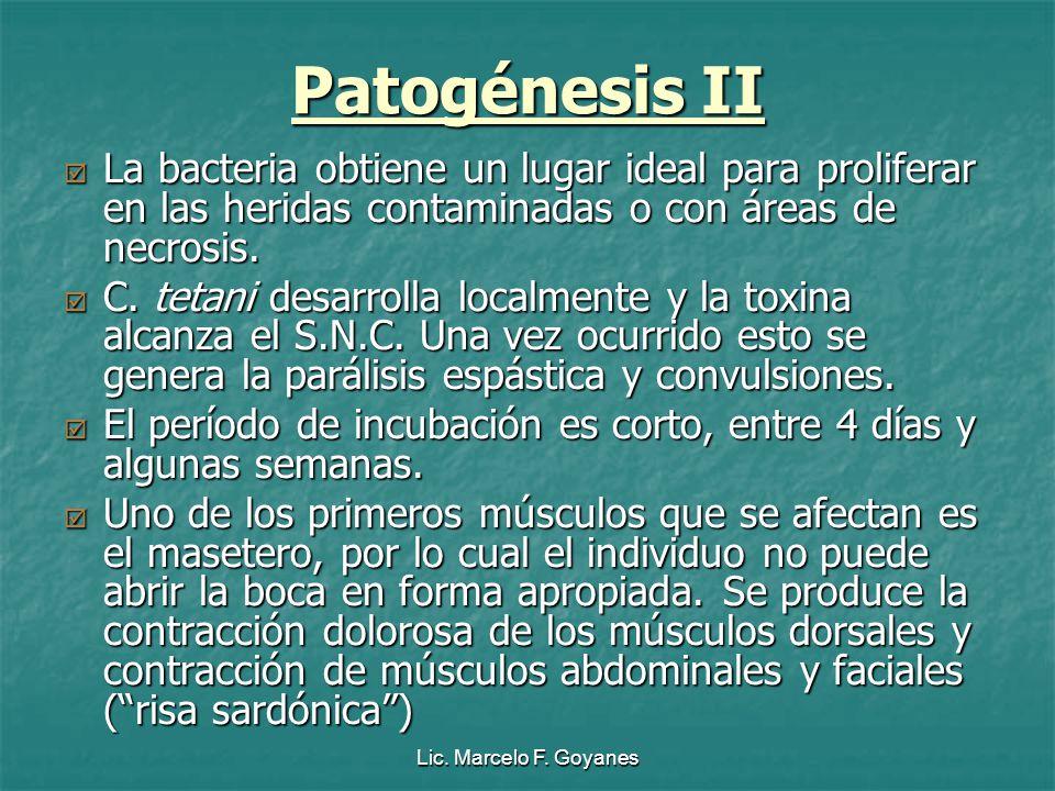 Lic. Marcelo F. Goyanes Patogénesis II La bacteria obtiene un lugar ideal para proliferar en las heridas contaminadas o con áreas de necrosis. La bact