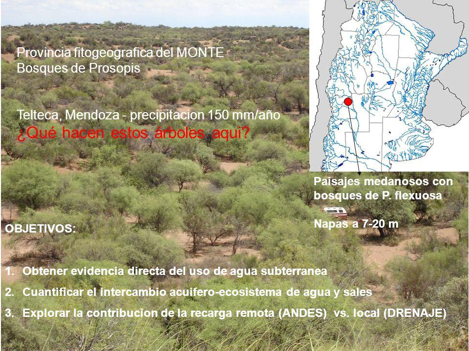 Provincia fitogeografica del MONTE Bosques de Prosopis Telteca, Mendoza - precipitacion 150 mm/año ¿Qué hacen estos árboles aqui? OBJETIVOS: 1.Obtener