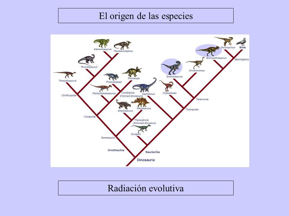 El origen de las especies Radiación evolutiva