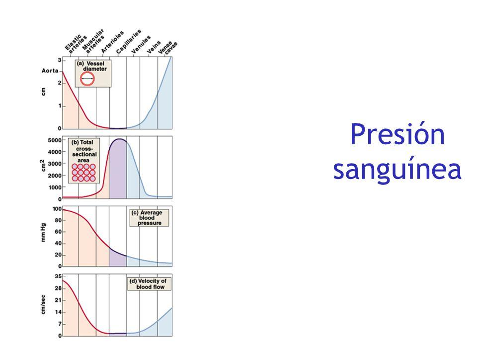 Cambios de presión en el sistema vascular LARGE ARTERIES SMALL ARTERIES ARTERIOLES CAPILLARIES VENULES &VEINS Presión media Diámetro interno PequeñoGr