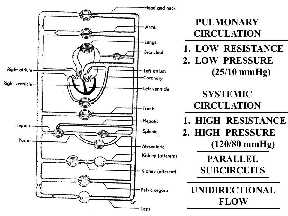 Que se puede simplificar Circuitos en serie y en paralelo
