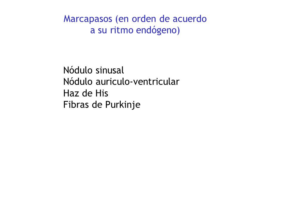 Fibras de Purkinje Haz de fibras Nódulo sinusal (SA) Nódulo auriculo-ventricular (AV)