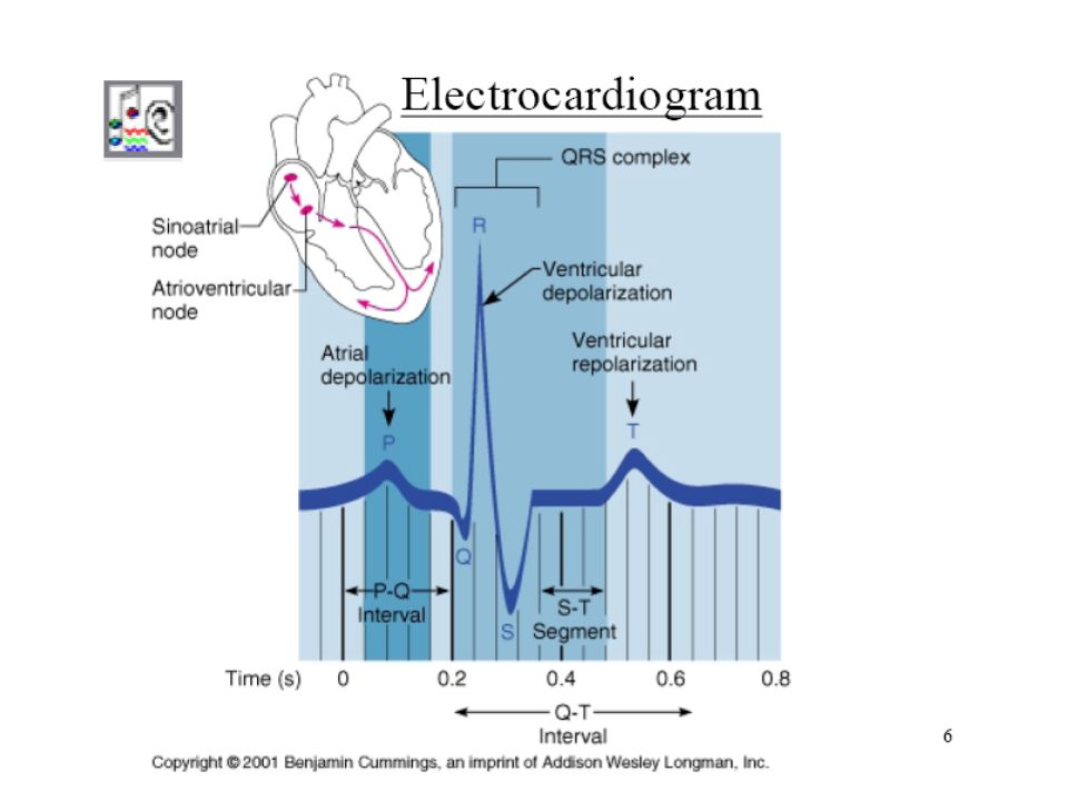 EL ELECTROCARDIOGRAMA (ECG)