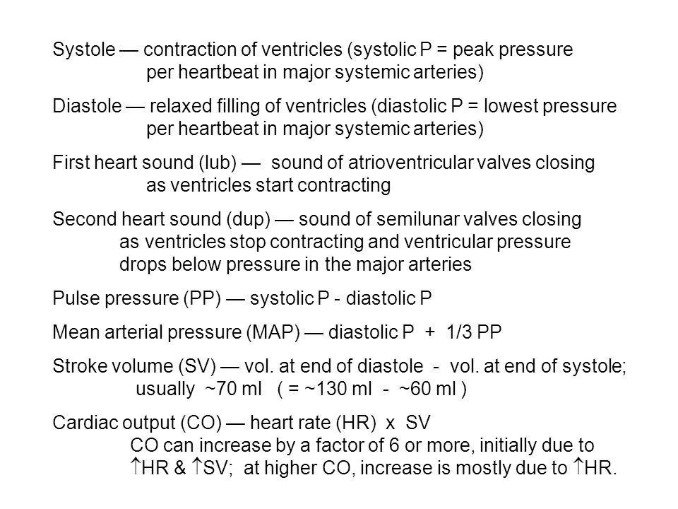 Aorta accepts output of the left ventricle; first vessel of the systemic vasculature; sustains highest systolic pressure, ~140 mm Hg Pulmonary artery