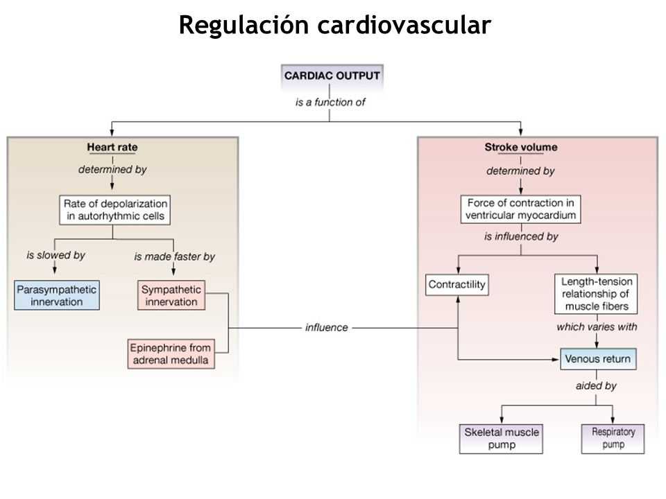 Autoregulación (Ley de Frank-Starling) Contractilidad Sistema simpático Sistema Parasimpático Gasto cardíaco = Volumen de latido x frecuencia cardíaca