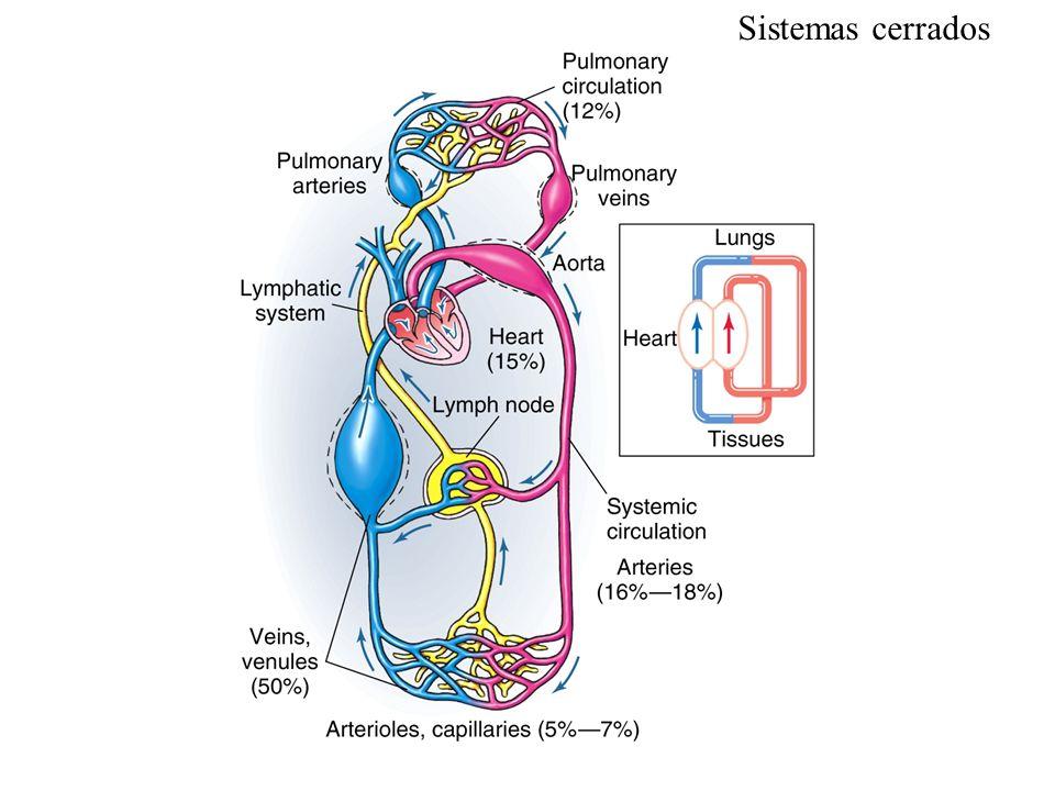 Gasto cardíaco Método de Fick: VO 2 = ([O 2 ] a - [O 2 ] v ) x Flujo Flujo = VO 2 [O 2 ] a - [O 2 ] v Espirometría (250 ml/min) Sangre Arterial (20 ml%) Sangre en arteria pulmonar (15 ml%) Gasto cardíaco Flujo periférico Retorno venoso Flujo pulmonar