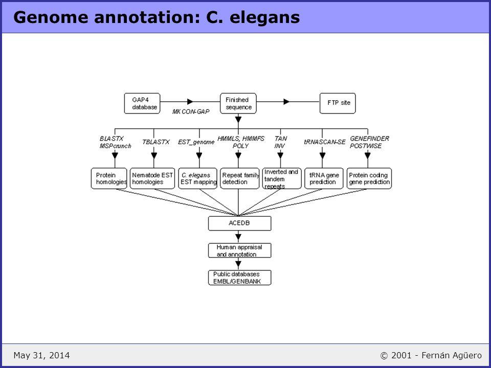 May 31, 2014© 2001 - Fernán Agüero Genome annotation: C. elegans