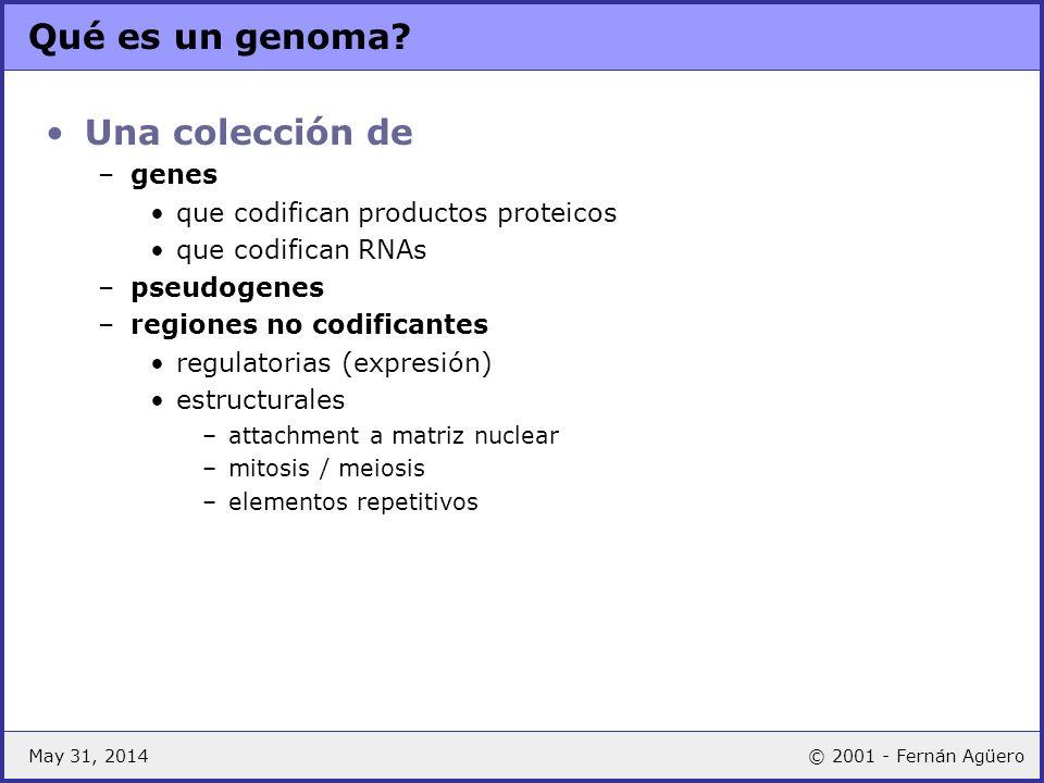 May 31, 2014© 2001 - Fernán Agüero Qué es un genoma? Una colección de –genes que codifican productos proteicos que codifican RNAs –pseudogenes –region