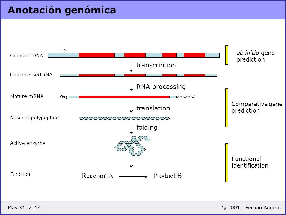 May 31, 2014© 2001 - Fernán Agüero Annotation & functional genomics Gene Knockout Expression Microarray RNAi phenotypes proteome based functional genomics La anotación del genoma es esencial en el desarrollo de estrategias funcionales (functional genomics)