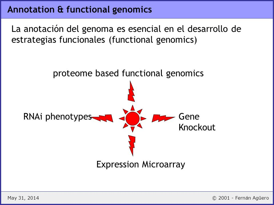 May 31, 2014© 2001 - Fernán Agüero Annotation & functional genomics Gene Knockout Expression Microarray RNAi phenotypes proteome based functional geno