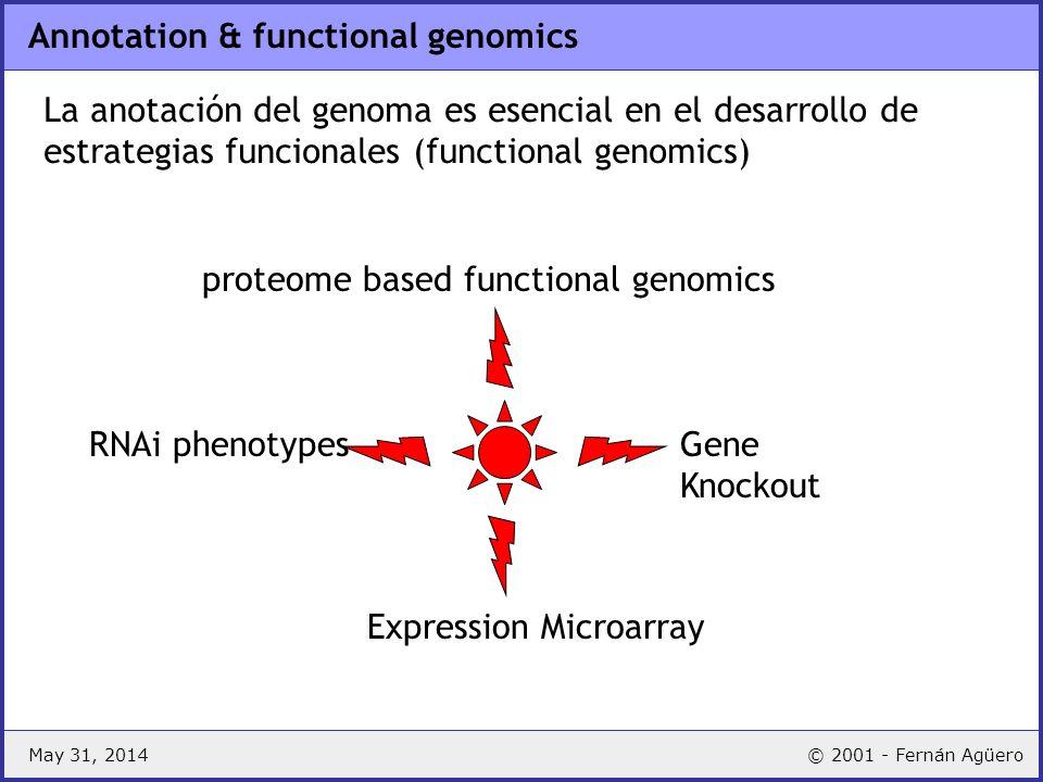 May 31, 2014© 2001 - Fernán Agüero Anotación: busqueda de genes Buscar genes en el genoma –RNA ribosomal RNAs BLASTN tRNAs tRNAscan –protein coding ab initio gene prediction ORFs, codon usage, frecuencia de hexámeros, modelos, etc.) similarity BLASTX, otros Buscar regiones no codificantes –regulatorias ab initio Gibbs sampling similarity patterns, profiles –repetitivas similarity ab initio En todos los casos literatura!