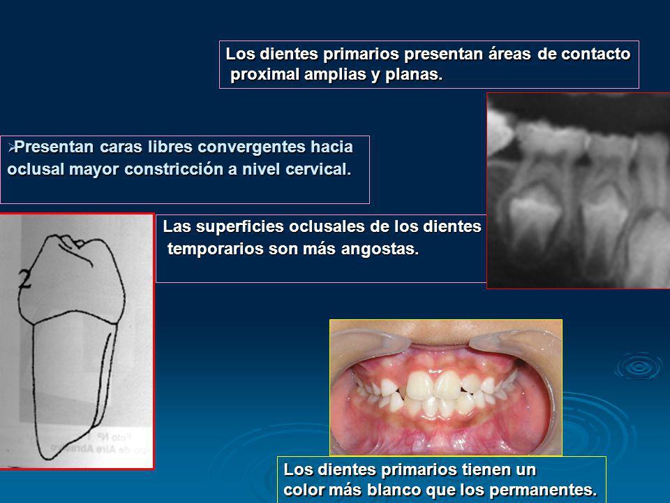 Presentan caras libres convergentes hacia Presentan caras libres convergentes hacia oclusal mayor constricción a nivel cervical. Los dientes primarios