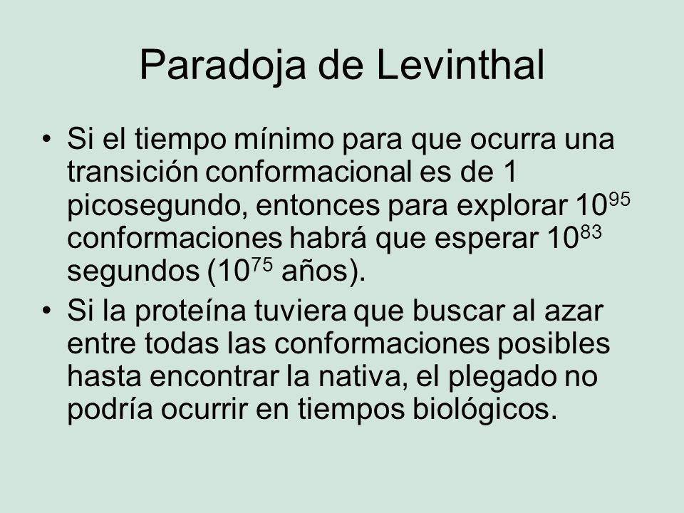 Paradoja de Levinthal Si el tiempo mínimo para que ocurra una transición conformacional es de 1 picosegundo, entonces para explorar 10 95 conformaciones habrá que esperar 10 83 segundos (10 75 años).