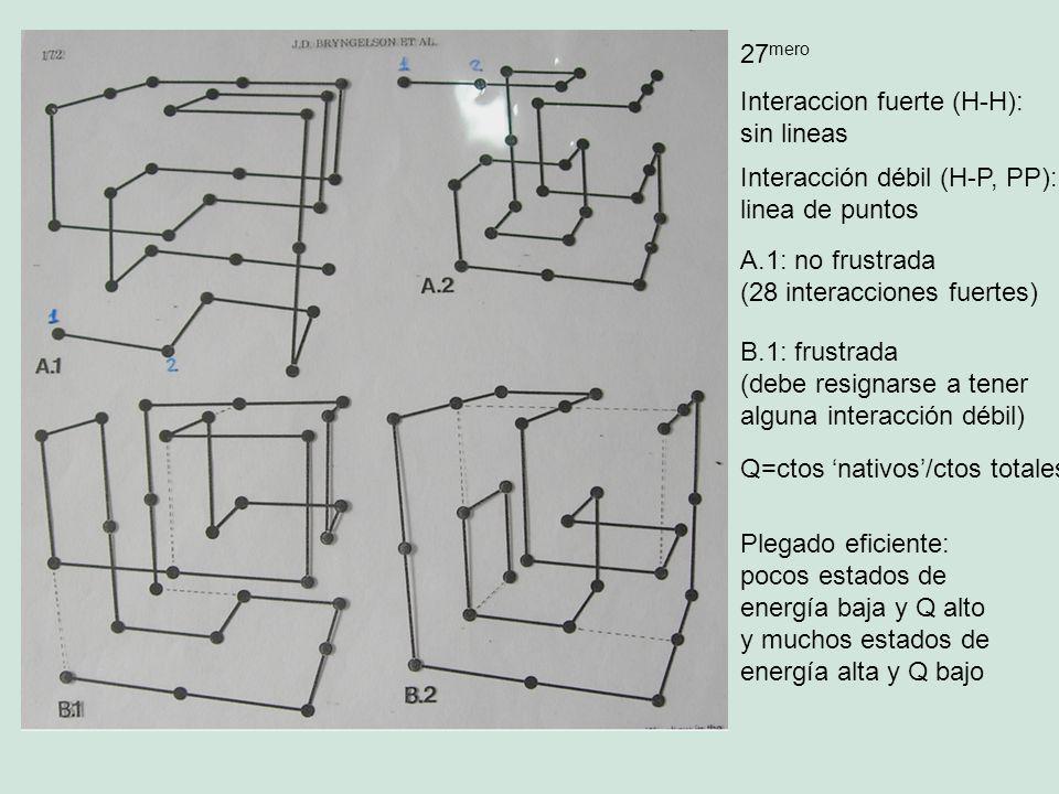 27 mero Interaccion fuerte (H-H): sin lineas Interacción débil (H-P, PP): linea de puntos A.1: no frustrada (28 interacciones fuertes) B.1: frustrada (debe resignarse a tener alguna interacción débil) Plegado eficiente: pocos estados de energía baja y Q alto y muchos estados de energía alta y Q bajo Q=ctos nativos/ctos totales