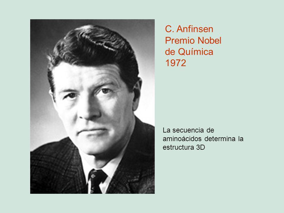 C. Anfinsen Premio Nobel de Química 1972 La secuencia de aminoácidos determina la estructura 3D