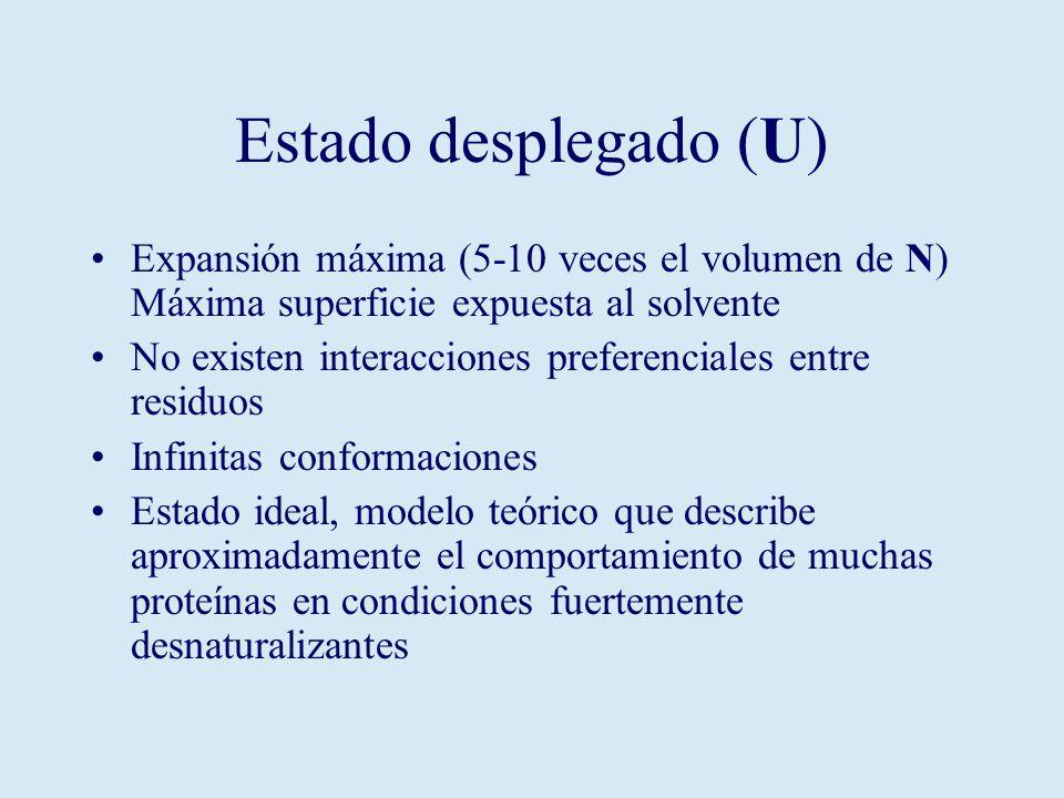 Estado desplegado (U) Expansión máxima (5-10 veces el volumen de N) Máxima superficie expuesta al solvente No existen interacciones preferenciales entre residuos Infinitas conformaciones Estado ideal, modelo teórico que describe aproximadamente el comportamiento de muchas proteínas en condiciones fuertemente desnaturalizantes