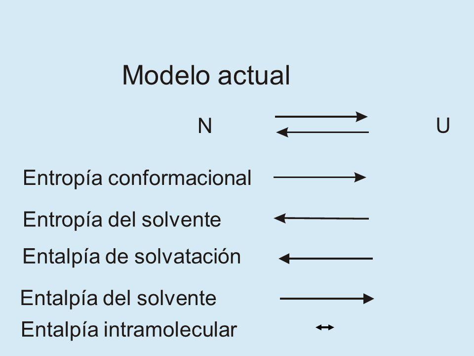 N U Entropía conformacional Entropía del solvente Entalpía de solvatación Modelo actual Entalpía del solvente Entalpía intramolecular