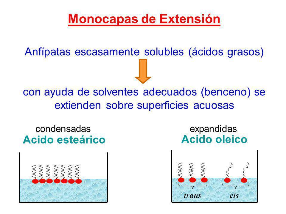 Los surfactantes disueltos en agua se acumulan en la superficie y forman una monocapa o película. solutos TIPO II A : agentes tensioactivos o surfacta
