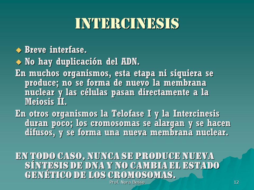 Prof.Nora Besso 12 intercinesis Breve interfase. Breve interfase.