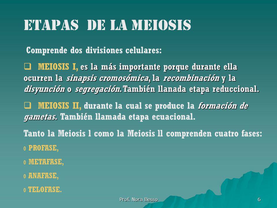 Prof.Nora Besso 17 Consecuencias de la meiosis Reducción del número de cromosomas a la mitad.