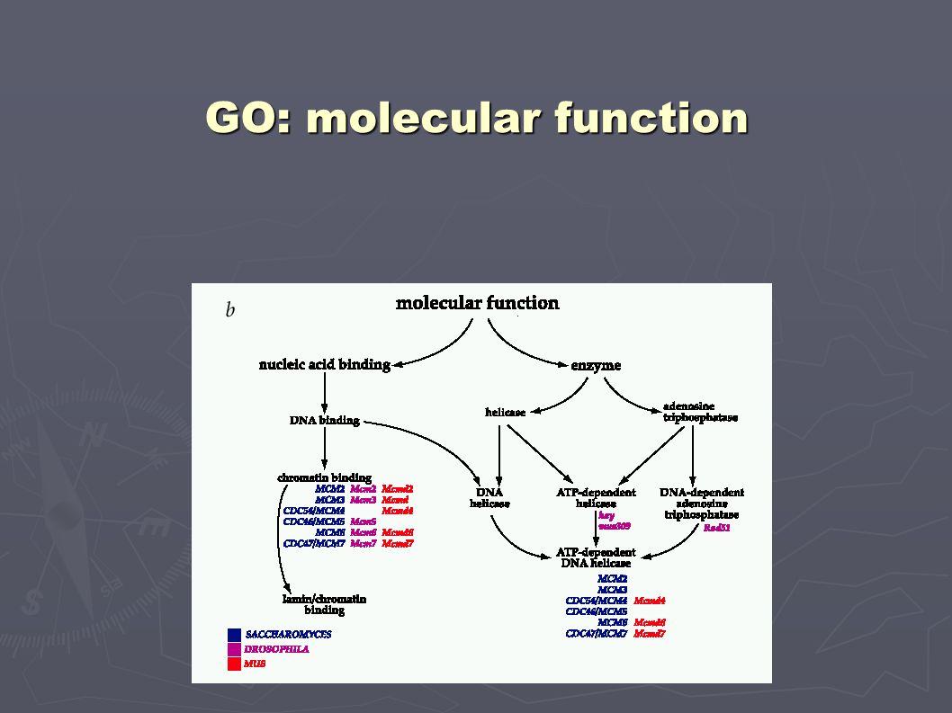 GO: molecular function
