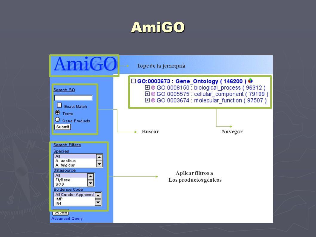 AmiGO Tope de la jerarquía NavegarBuscar Aplicar filtros a Los productos génicos