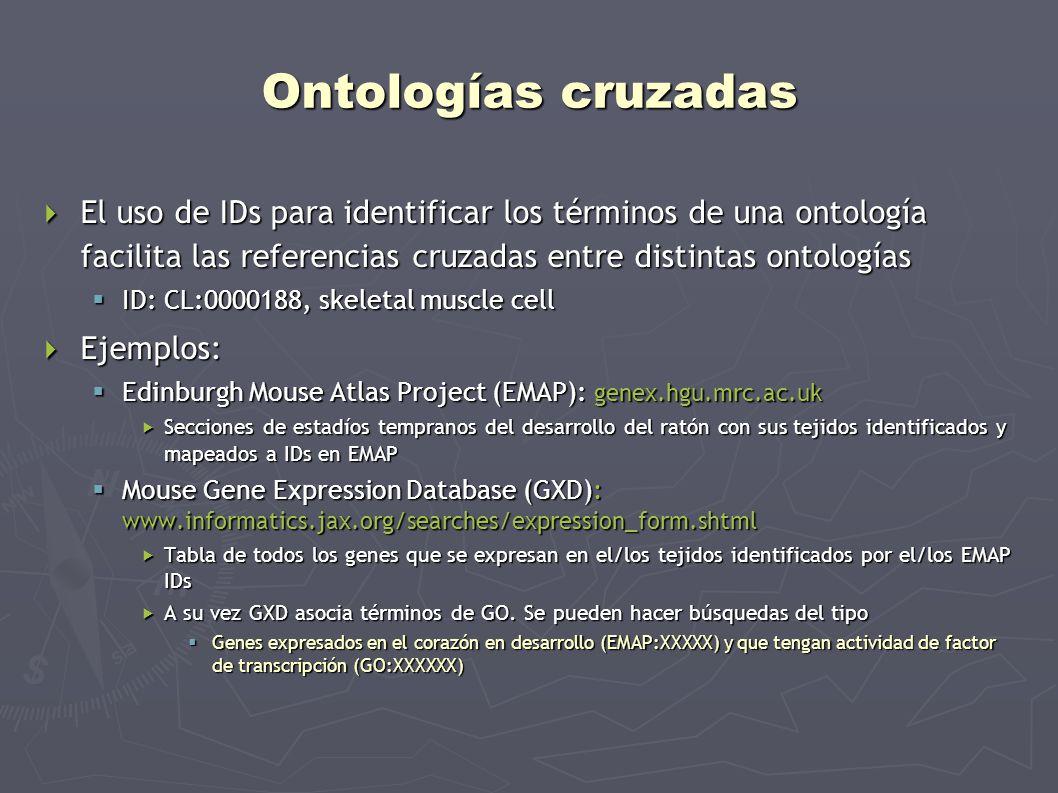 Ontologías cruzadas El uso de IDs para identificar los términos de una ontología facilita las referencias cruzadas entre distintas ontologías El uso d