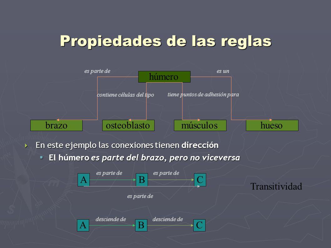 Propiedades de las reglas En este ejemplo las conexiones tienen dirección En este ejemplo las conexiones tienen dirección El húmero es parte del brazo