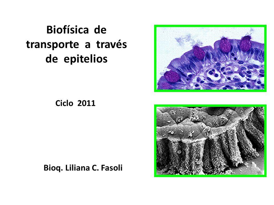 Biofísica de transporte a través de epitelios Ciclo 2011 Bioq. Liliana C. Fasoli